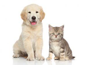 Las mascotas son parte de la familia